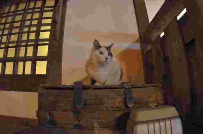 にゃんたと同じ頃にやってきて、金具屋さんでお世話になっていたシロ(男のコ)。数年前に天国へ旅立ちましたが、いまだに懐かしがる人も多く、愛情をたっぷりそそがれた猫さんです。