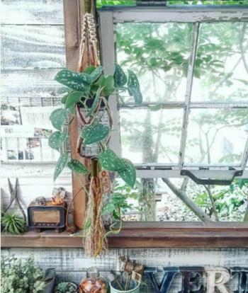 大きな窓の柱に沿わせハンギンググリーンを配置して。  まるで外の空間がそのままお部屋の中まで入り込んできたいみたい。グリーンの息吹をすぐそこに感じます。