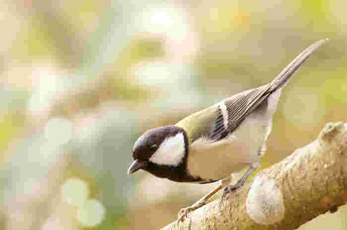 豊かな自然が広がる田貫湖では、季節に合わせてたくさんの可愛らしい野鳥の姿が見られます。野鳥愛好家にも人気のスポットになっています。