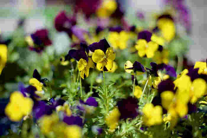 咲き誇る花と共に季節を感じたり……