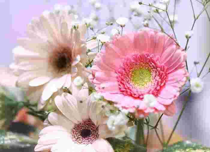 小さな花びらがたくさん重なった姿がなんとも愛らしいガーベラ。ピンクのガーベラの花言葉は「感謝」「崇高美」です。ガーベラには様々な種類があるので、同じピンクでも幅広いアレンジに仕上がりますよ。