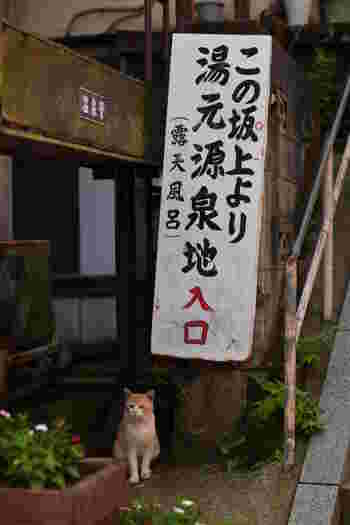 温泉×猫の最強コラボ。今年の冬は、ぜひ温かい温泉ともふもふに癒されに行ってくださいね。