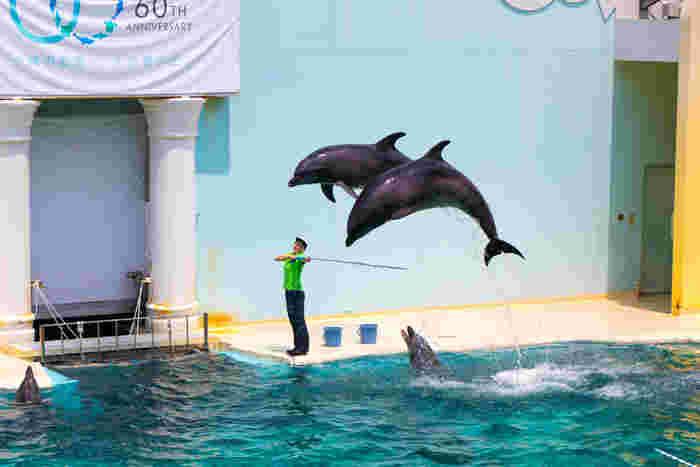 1日4回行われる人気のイルカショー。賢くかわいいイルカ達の、ダイナミックなジャンプや愛らしいしぐさに歓声が起こります。有料でイルカにタッチできるイベントも行われていますよ。