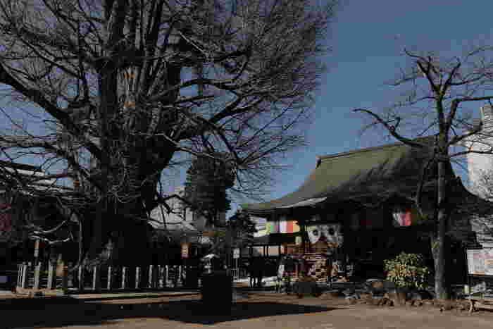 境内には、国の天然記念物に指定されている「飛騨国分寺の大イチョウ」と呼ばれる推定樹齢1250年、幹回10メートルの銀杏の大木がそびえています。