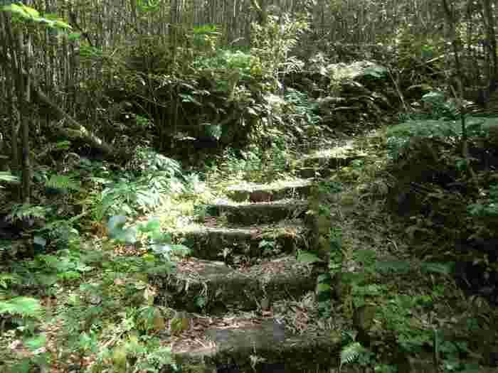 青ヶ島村無番地。 未開拓の地が、広がります。マイナスイオンたーっぷり! 自然を思いっきり感じることができ、その雰囲気はとても神秘的です。