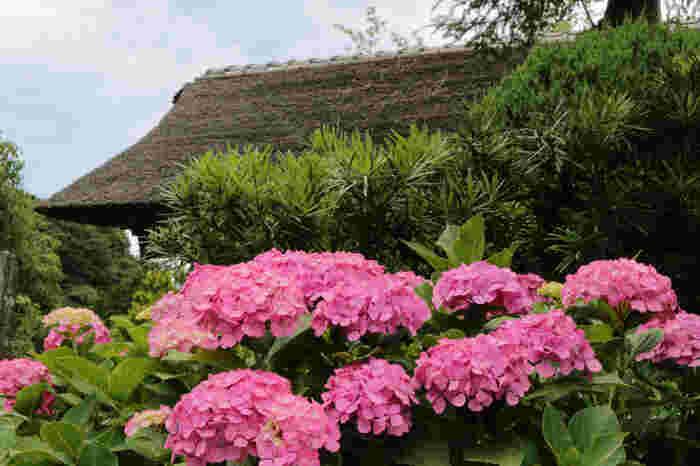 春の桜、梅雨の紫陽花、夏のサルスベリが有名。特に夏に咲き開く「サルスベリ」は実に見事。【境内は撮影禁止】