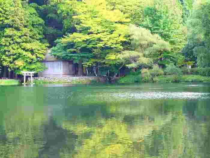 湯布院にある自然豊かな湖「金鱗湖」は、温泉地・湯布院ならではの不思議なスポット。一見普通の湖に見えますが、湖底からは清水と温泉水が湧き出ています。「金鱗湖」という名称は、水面に反射する夕日が金の鱗のように見えて名付けられたのだとか。緑に囲まれた美しい湖は紅葉の季節になると様変わりし、また違った表情を見せてくれます。