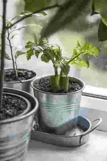 まだまだおすすめの趣味がたくさん!  ・裁縫スキルも上がって生活にも役立つ「手芸」 ・ビジネスで通用する字を書けるように「ペン字」 ・プランター栽培でもOK!新鮮な食材を育てる「家庭菜園」 ・種類や正しい入れ方を学びながら優雅な時間を「コーヒー/紅茶」