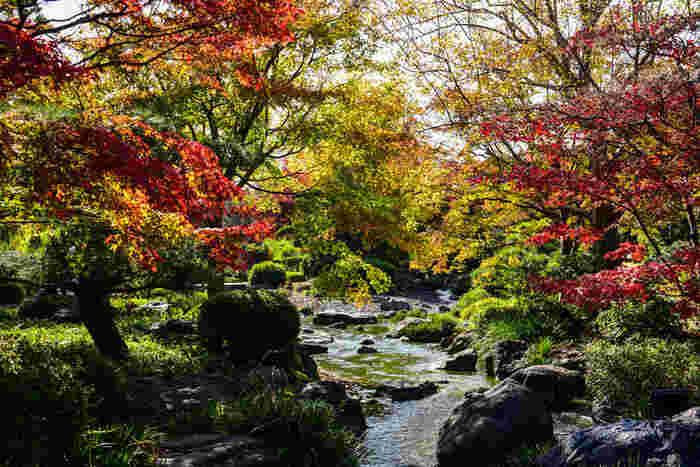 「日本の都市公園100選」「大阪みどりの百選」「日本の歴史公園100選」に選定されている大仙公園には、桜の木が約400本植樹されており、毎年春になると花見の名所となるほか、秋になると桜紅葉で美しい景色を見せてくれます。