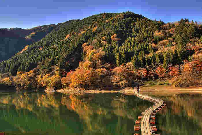 ゆらゆら揺れる「ドラム缶橋」を渡って、少しスリルを味わいながら紅葉を楽しむのもおすすめ。また、時期によっては春と秋に2回開花する「シキザクラ」と紅葉のコラボレーションを見ることができますよ。
