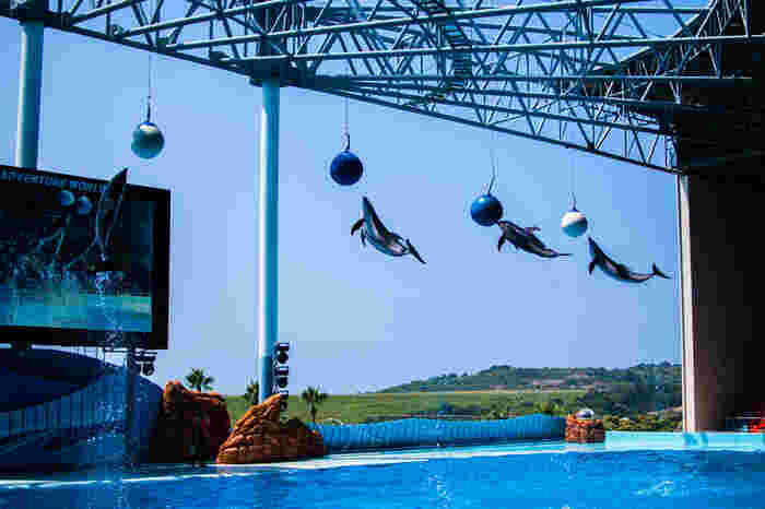 みなぎる熱気の中、調教師の合図でイルカたちが一斉に空高くジャンプします。間近で見るイルカたちの跳躍力の高さには、きっと驚かされることでしょう。