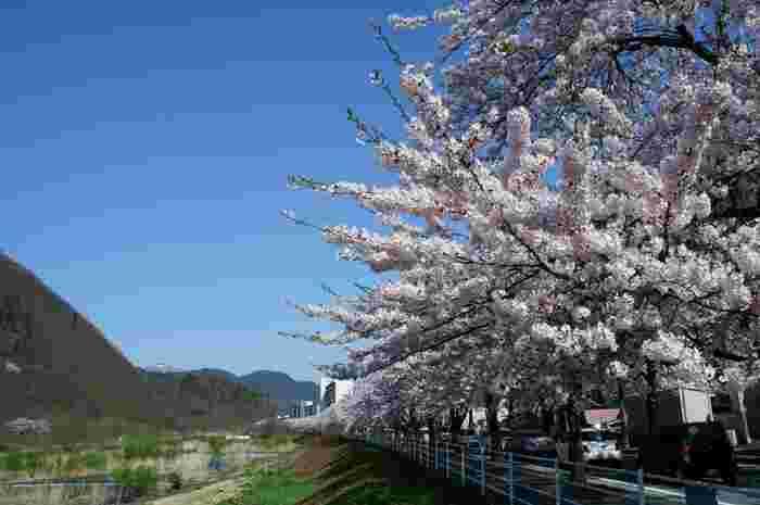カフェから眺められる馬見ヶ崎川は春になると桜に包まれます。ほんのりと優しい風が頬をなでて、忙しい日々をふっと忘れさせてくれるはず。  桜の時期だけは夜もお店を開けてくれるという情報も。それにしてもロマンチックですね…・・・。
