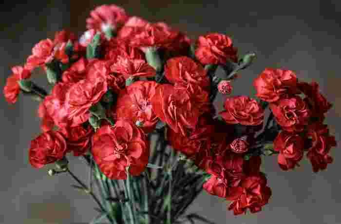 アンナ・ジャービスは亡くなった母へ白いカーネーションを贈ったことから、亡き母へ贈るなら白色、健在の母へ贈るなら赤色という習慣が広まっていったのだそう。また、赤いカーネーションには「母への愛」「母の愛」といった花言葉があるのも理由の1つといえるでしょう。
