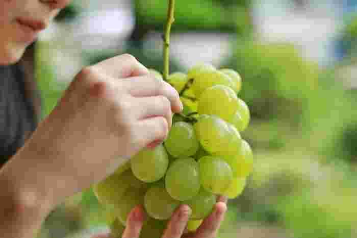 【岡山を代表する特産果物「マスカット・オブ・アレキサンドリア」。麗しい姿同様に、香り高く、味も極めて上品。岡山ならではの味わいです。】