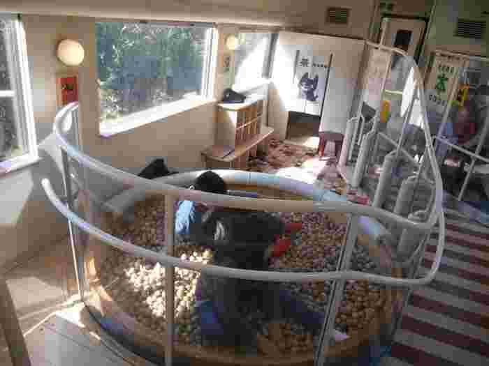 ファミリー車両には、ボールがたくさん入った「木のプール」が!子供達も大喜び♪この他に図書室などの共用スペースもありますよ。