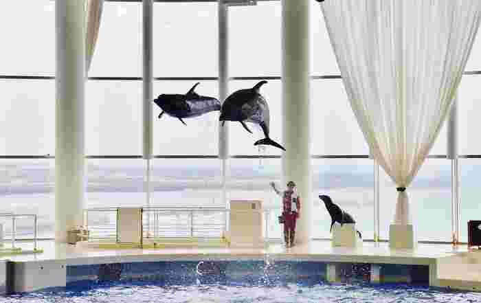 アザラシ、ペンギン、イルカなど、水族館の中でも人気の生き物たちが集まるオーシャンゾーン。オーシャンシアターで開催される芸達者な生き物たちのショーは見逃せません。また、オーシャンライブが行われているプールの真下にあるアクアホールでは、イルカたちの水中の姿を観察できます。ライブカメラにて、ショーの様子もチェックできる穴場スポットもおすすめです。