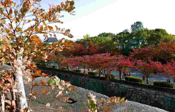 大阪城公園の紅葉はモミジやカエデではなく、桜紅葉がメインとなります。爽やかな秋の空気を肌に感じながら、赤く染まった桜並木を歩いてみる気持ち良さは格別です。