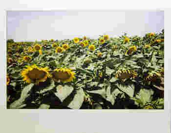 チェキWIDEのフィルムは一般的なチェキのフィルムの2倍、86×108mmとなっています。より広い範囲の撮影が出来るので、大人数集まった時や風景を撮るのにピッタリ。