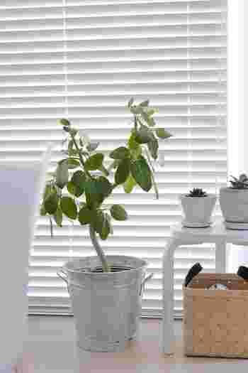 メインルームに主役になるような大きめの観葉植物をぽんと置けばお部屋が一気に春めきます。お部屋のテイストに合わせて、鉢を着せ替えして季節感を出しても素敵です。