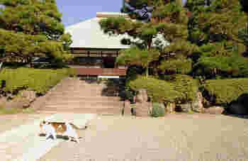 浄明寺は臨済宗のお寺で1188年に創建され、鎌倉五山の第五位と高い寺格を持ちます。鎌倉時代には広大な敷地を誇っており、周辺の字名が「浄明寺」と呼ばれるのはその名残です。 山門をくぐると、本堂までまっすぐのびる石畳、整えられた木々、青々とした芝生がとても印象に残ります。