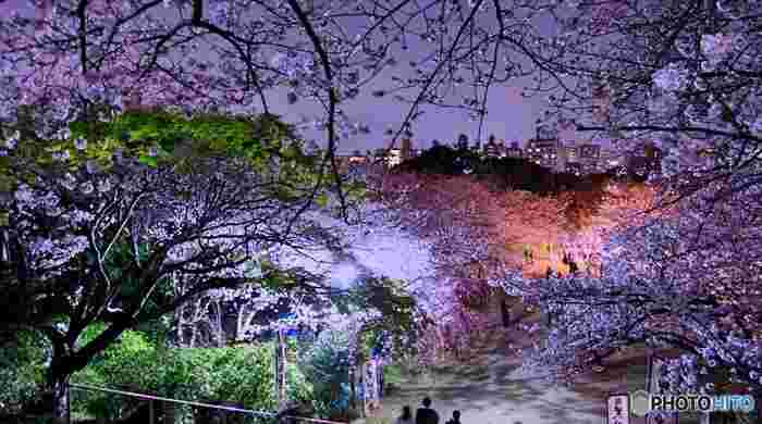 桜の季節には屋台が並ぶので、いろんなグルメを楽しむのも◎西公園の山頂には「光雲神社」があり、期間中は桜がライトアップされます。光雲神社から眺める桜並木は、なんとも神秘的で美しい。