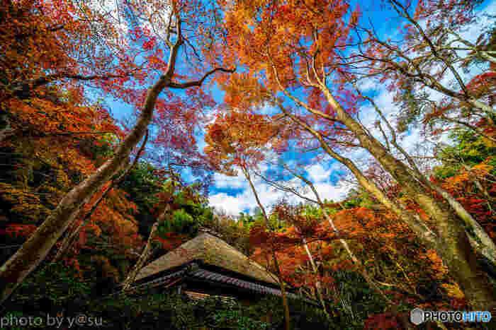 平家物語にも登場する祇王寺は、平清盛の寵愛を受けた白拍子、祇王と仏御前が清盛の寵を失った後に、出家をして余生を過ごした悲恋の寺院として知られています。