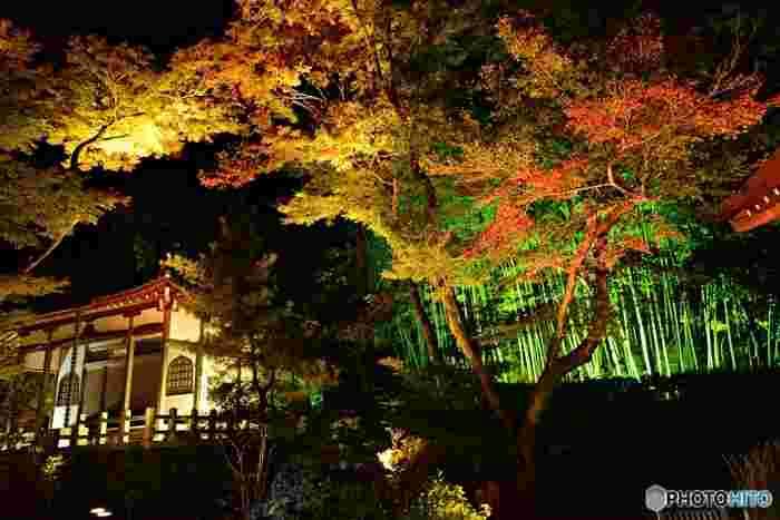 11月10日~12月3日の期間には、夜間に特別にライトアップがなされます。漆黒の闇に、色づいた木々がより鮮やかに映ります。