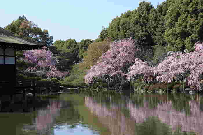 春爛漫とした陽気に包まれながら絶景を楽しもう♪桜の名所11選【京都市編】