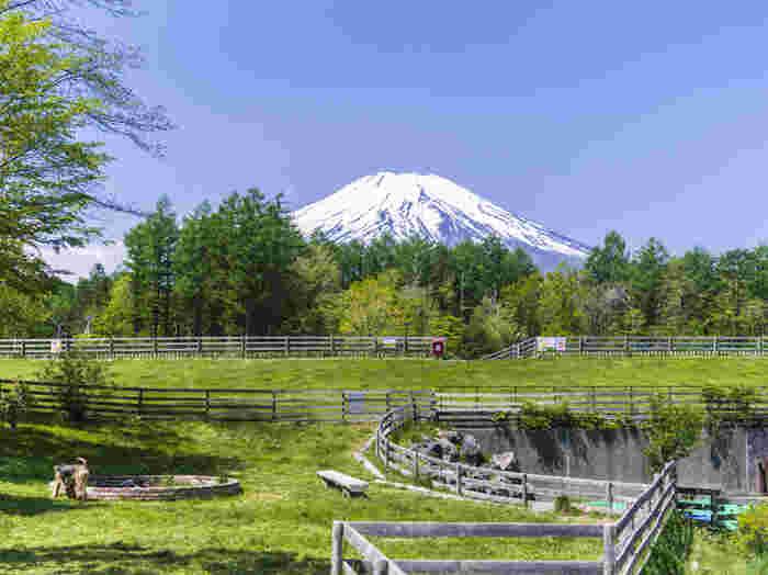 牧場のように広いドッグランからは、富士山が見えます。