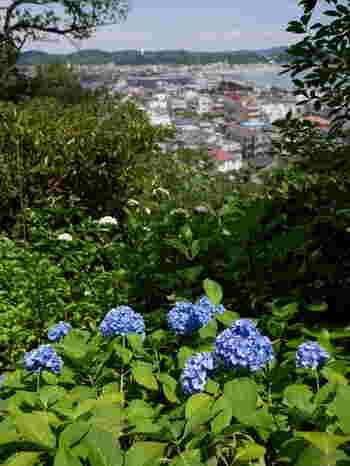 そして長谷寺の醍醐味の一つが、高台から望む眼下に見える由比ヶ浜海岸に山と紫陽花。都会ではなかなか味わえない自然の喜びを感じることができます。