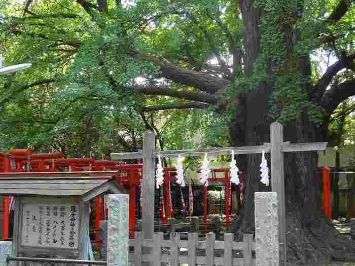 境内にある大イチョウは「子授け銀杏」と呼ばれ、樹齢は700年以上といわれています。こちらで子宝祈願をしましょう。