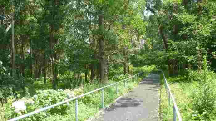 ゴミの埋立処理場跡地に整備された「夢の島公園」は、43haもある広大な公園。競技トラックやアーチェリー場などの施設の間には緑道があり、木漏れ日が気持ち良く差し込みます。鳥のさえずりや虫の音を聴きながら歩いてみませんか?