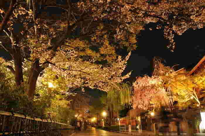 2016年までは桜のライトアップがありましたが、観光客が多く安全を考えて昨年は中止、今年も中止が決まっています。とにかく人の多い祇園白川、ゆっくり楽しんだり写真を撮りたい場合は、早朝に訪れるのがおすすめです。