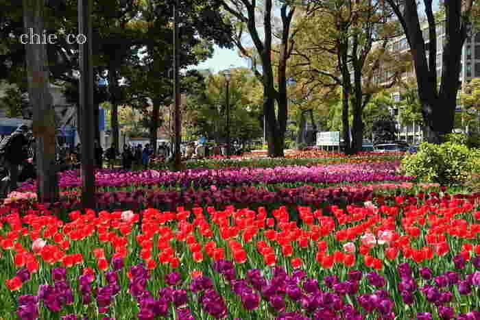 横浜公園は、神奈川県でも屈指のビジネス街である横浜市中区にある横浜市役所に隣接した都市公園で、県民にとっては、緑豊かな都心のオアシスのような場所です。
