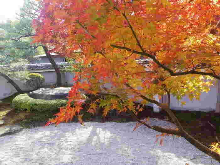 店内には約400㎡の日本庭園が。美しい庭園を眺めながら、和スイーツが頂けます。嵐山散策の休憩にぴったりですね。