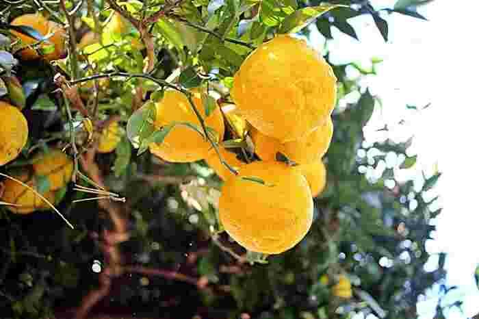 基本をおさえればアレンジ自在!「自家製ポン酢」の作り方&活用レシピ