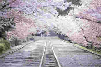一般的に、線路上を歩くことは禁止されていますが、蹴上インクラインは現在は使用されておらず史跡となっているため通行も可能に。レールの上を列車が通るように、歩いて桜のトンネルをくぐることができますよ♪