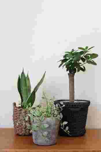 インテリアグリーンを素敵に飾るなら、複数集めるのがおすすめ。 特に小さな鉢植えは、たくさん集めた方が葉のカタチや色合いが混ざり合い、表情豊かなディスプレイに。また一箇所に集めることで、お手入れもラクになりますよ。
