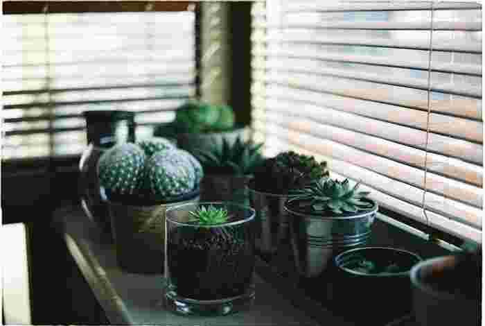 キッチンにサボテンを置いて。グリーンがあると和みます。