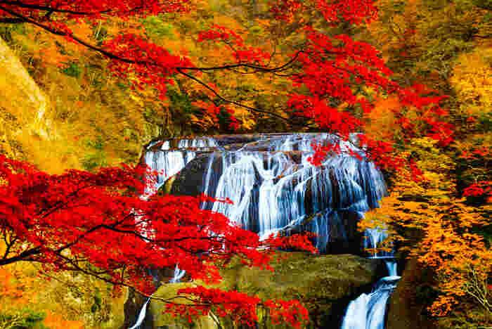 幅73m、高さは120mと迫力の袋田の滝。鮮やかな紅葉に囲まれ、四段になって流れ落ちる滝の姿は、ため息が出るほどの美しさです。見頃は11月上旬~11月中旬です。