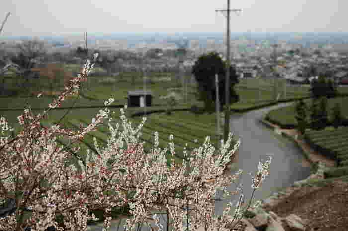 日本の美しい里山の風景と共にユーモアたっぷりに家族の日常を描いた映画「茶の味」。 ちょっぴり風変りだけど、温もりのある日常風景がファンタスティックに描かれています。