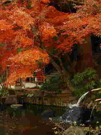 境内に配された2つの池、妙智池と放生池と紅葉のコントラストも美しい。