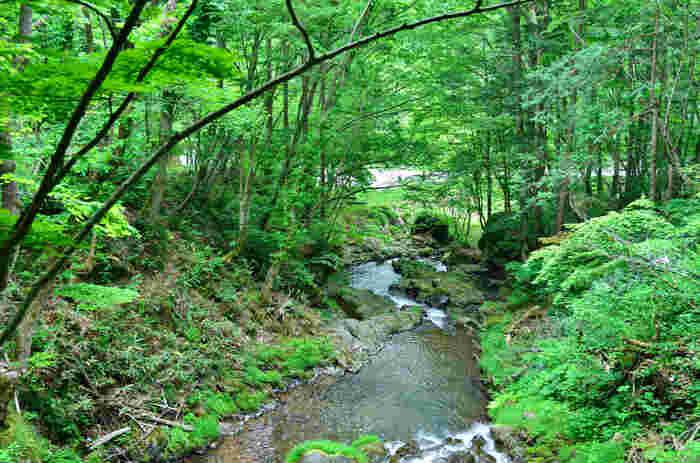 ここでは、豊かに広がる広葉樹の森と、大小合わせると100もあるといわれている美しい滝が織りなす雄大な大自然を満喫することができます。