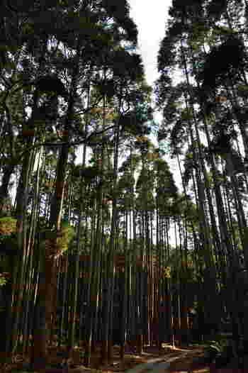 千葉県君津市に位置する鹿野山とは、南房総国定公園の一部で白鳥峰(標高379メートル)・熊野峰(標高376メートル)・春日峰(標高352.4メートル)の三山の総称です。よく整備された山道は、杉林となっており、昼間でも薄暗く荘厳な雰囲気を漂わせています。