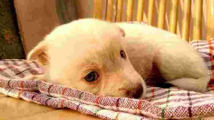 「どんなに可愛い犬でも思い通りにはならない」 子犬は可愛いけれど、エネルギーが有り余っていることも多いんです。ソファーなどのインテリアを食いちぎったり、ケーブルや充電コードなども噛みちぎってしまうことも。必ずしも思い通りにはならないということを、肝に命じておきましょう。