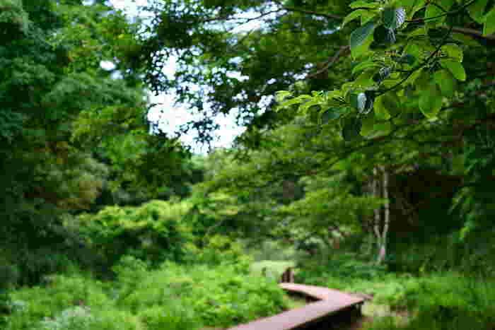 木々の葉が揺れる音や鳥のさえずりなど、都心からそれほど離れていないのにまるで別世界にいるよう。深呼吸をして、花の香りや水音も全身で感じてみましょう。