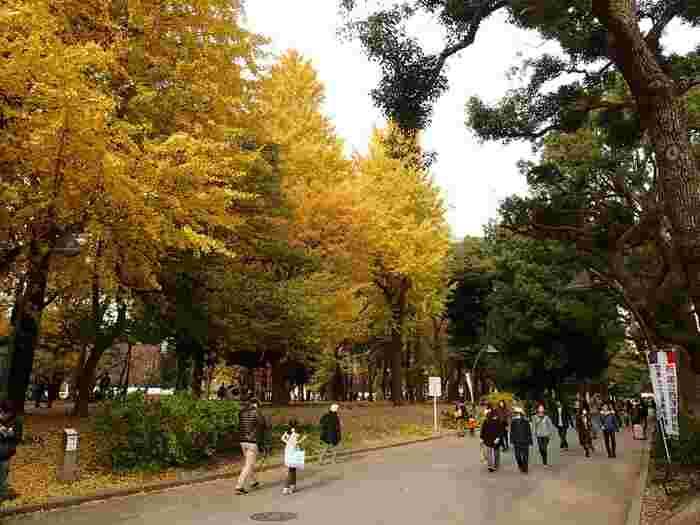 お花見で有名な上野公園。秋の紅葉もキレイなんですよ。銀杏並木をゆっくり歩けば、秋の空気が感じられます。園内には、歴史上の人物の彫像や文化財に指定されている建物などが点在。いくつ見つけられるか探してみては?