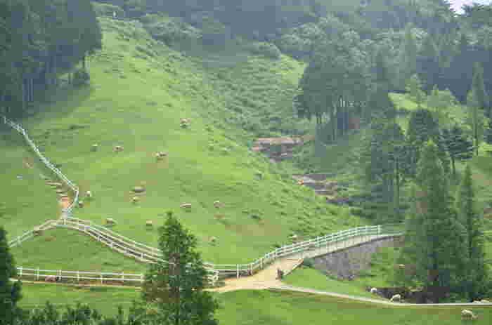 放牧されている羊達と自由に触れ合える「六甲山牧場」。『アルプスの少女ハイジ』の世界を彷彿させてくれます。