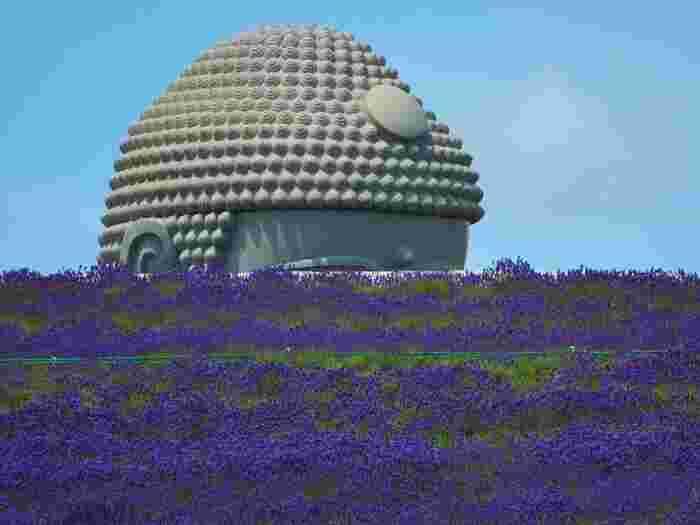 世界的な建築家の安藤忠雄氏により作られた、大仏殿から頭が飛び出した「頭大仏」と呼ばれる大仏殿。ラベンダーが見頃を迎える7~8月には、大仏殿のあたり一体がラベンダー色に染まります。