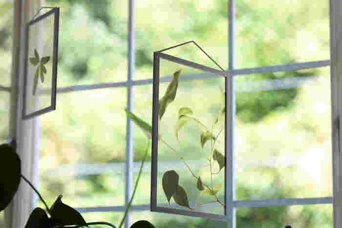 「Floating Leaves」のポスターは、クリアフィルムに植物がUVプリントされています。光が注ぐ窓際などに吊るして飾ると魅力が最大限に発揮されます。透明感が奥行きをもたらし、いきいきとした美しさを感じられます。